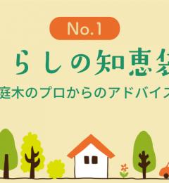 庭木のプロからのアドバイス