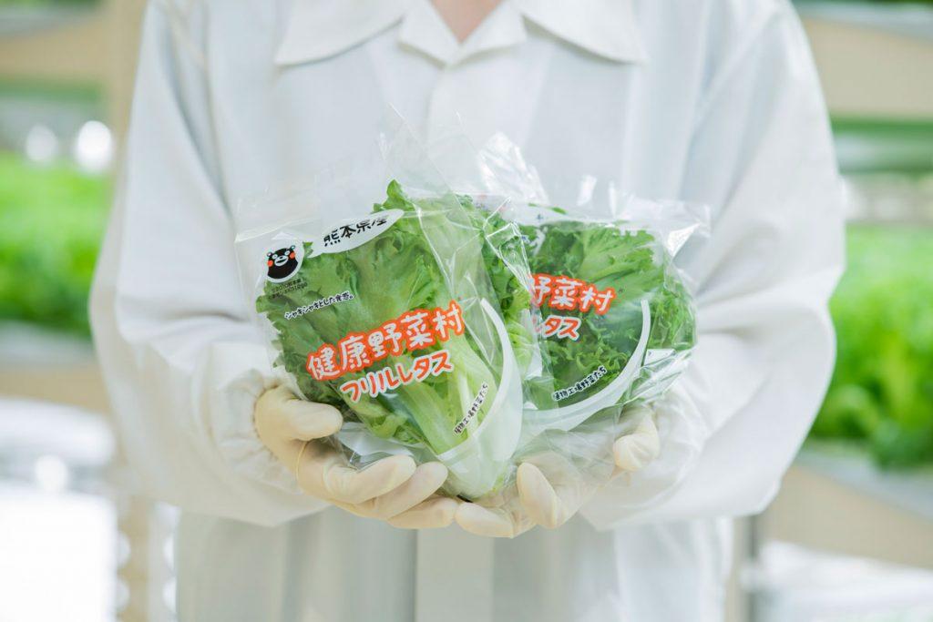 【健康野菜村】ふわシャキレタスセット