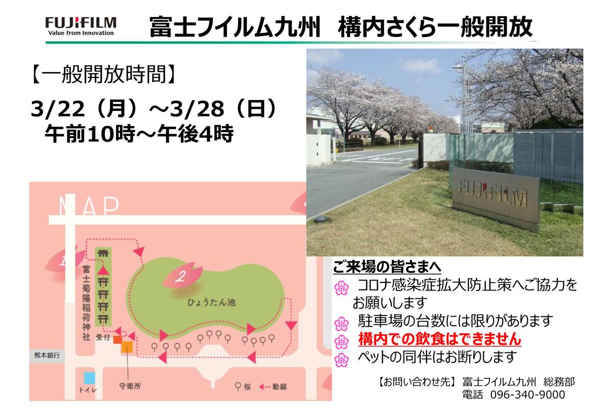 富士フイルム九州 構内さくら一般公開について